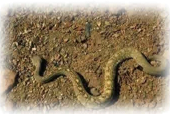 Schlangen bewegen sich schlängelnd.