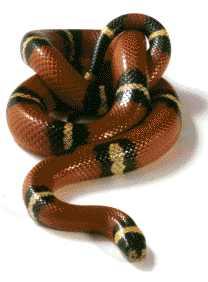 Meistens schlafen Schlangen so wie auf dem Bild.